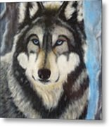 Adult Grey Wolf Metal Print