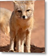 Adult Kit Fox Ears And All Metal Print