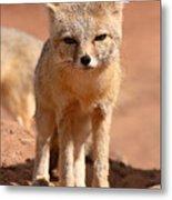 Adult Kit Fox Ears And All Metal Print