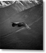 Aerial Predator Over Banff Metal Print