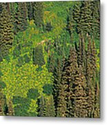 Aerial View Of Forest On Mountainside Metal Print