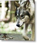 Aero Wolf 1 Metal Print