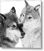 Affection Of Wolves Metal Print