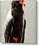 African Eagle-bateleur II Metal Print