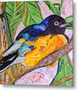 African Blue Eared Starling Metal Print