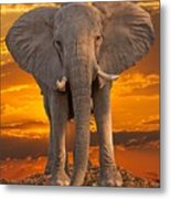 African Bull Elephant At Sunset Metal Print