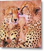 African Cheetah's  Metal Print
