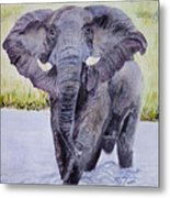 African Elephant Crossing The Chobe River Metal Print