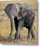 African Elephant Happy And Free Metal Print