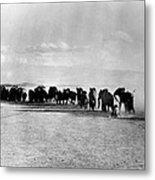 African Elephant Herd Metal Print