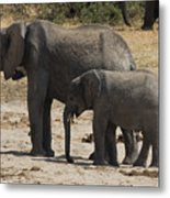 African Elephants Mother And Baby Metal Print