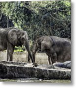 African Elephants_hdr Metal Print