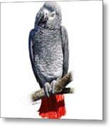 African Grey Parrot C Metal Print
