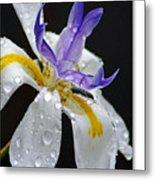 African Iris Metal Print