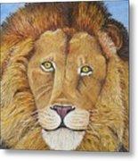 African Lion Metal Print