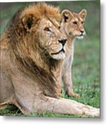 African Lion Panthera Leo With Its Cub Metal Print