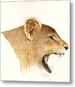 African Lioness Metal Print