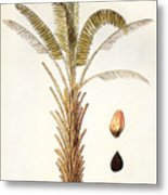 African Oil Palm Metal Print