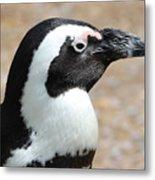 African Penguin  Metal Print