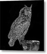 African Spotted Eagle Owl Metal Print