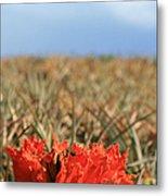 African Tulip Blossom Over Pineapple Field Aloha Makawao Metal Print