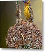 Weaver Nest Metal Print