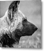 African Wild Dog Metal Print