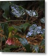 After Rain. Souvenir De Bonn. Metal Print