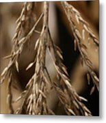 After The Harvest - 1 Metal Print