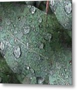 After The Rain 4 Metal Print