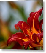 After The Rain Came The Flowers  Metal Print
