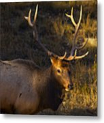 After The Rut Metal Print
