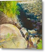 Afternoon Beside The Lane Cove River Metal Print