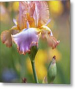Afternoon Delight. The Beauty Of Irises Metal Print