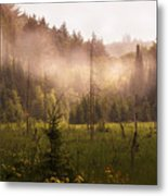Afternoon Mist Metal Print