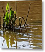 Afternoon Reflections Metal Print