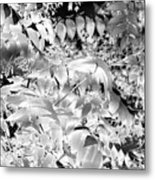 Afternoon Sunlight With Stars Metal Print