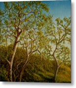 Afternoon Sycamores Metal Print