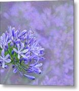 Agapantha Lilac Pastel By Kaye Menner Metal Print