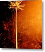 Agapanthus After The Storm Metal Print
