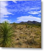 Agave And The Mountains 3 Metal Print
