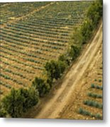 Agave Fields Metal Print