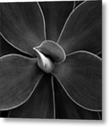 Agave Leaves Detail Metal Print