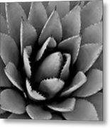 Agave Plant Metal Print