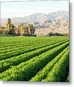Agriculture In The Desert Metal Print