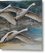 Ahead Of The Storm - Trumpeter Swans On The Move Metal Print