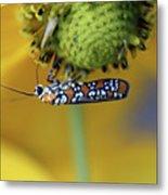 Ailanthus Webworm Moth #6 Metal Print