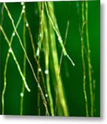Air Roots Orchid Metal Print