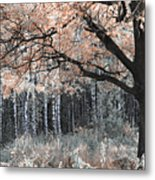 Airy Autumn In Woods Metal Print