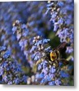 Ajuga And Bumblebee Metal Print